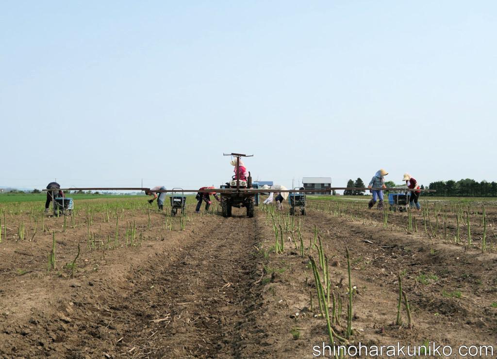 収穫ロング