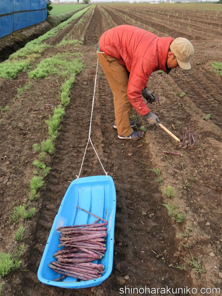 朝の紫収穫
