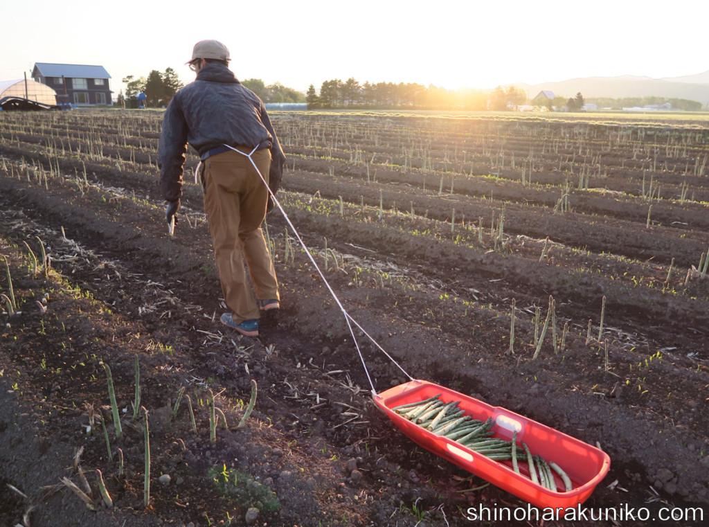 早朝の収穫