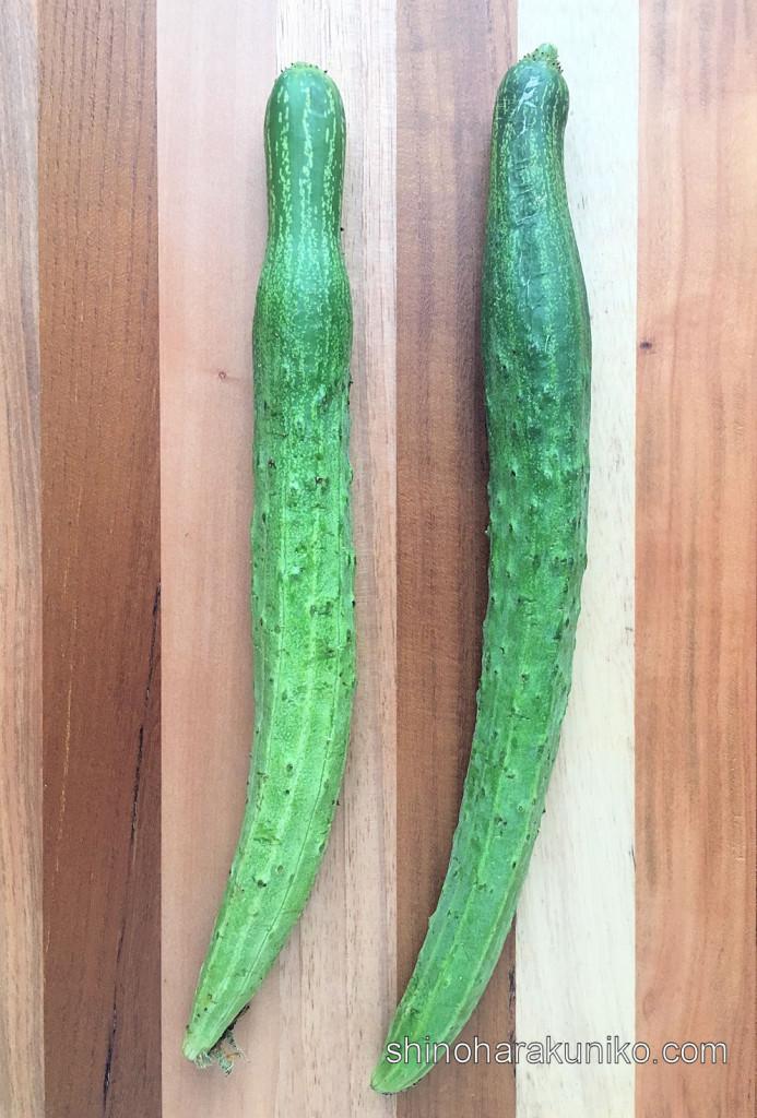 畔藤きゅうり(山形おきたま伝統野菜)
