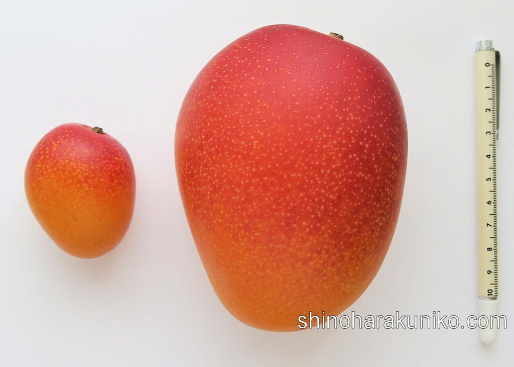 大小マンゴー比較